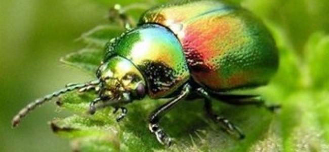 Buen Vivir, Plurinacionalidad y Derechos de la Naturaleza en el debate constituyente