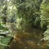 Colombia reconoce los derechos de la Naturaleza en su Amazonia
