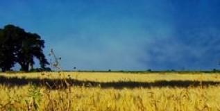 Derechos de la Naturaleza: Globales pero también Locales