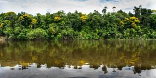 Colombia concede derechos a la Amazonia